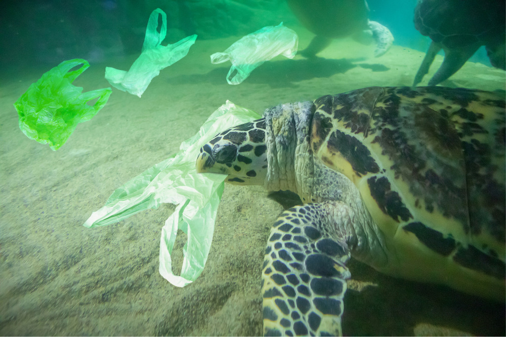 Turtle with plastic bags