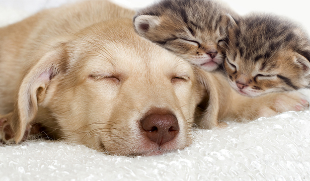 cat and dog sleeping next to each other